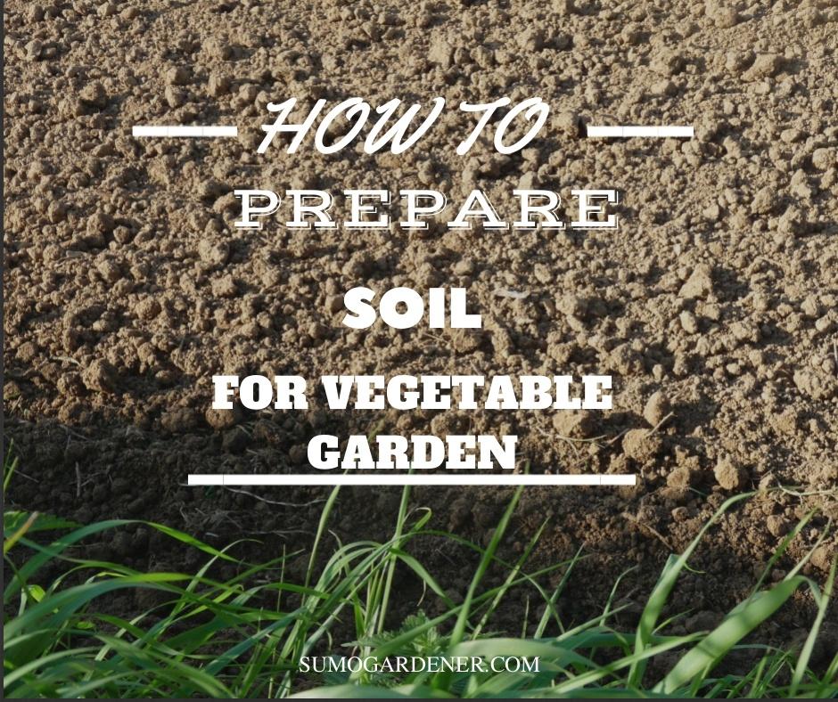How to prepare soil for vegetable garden