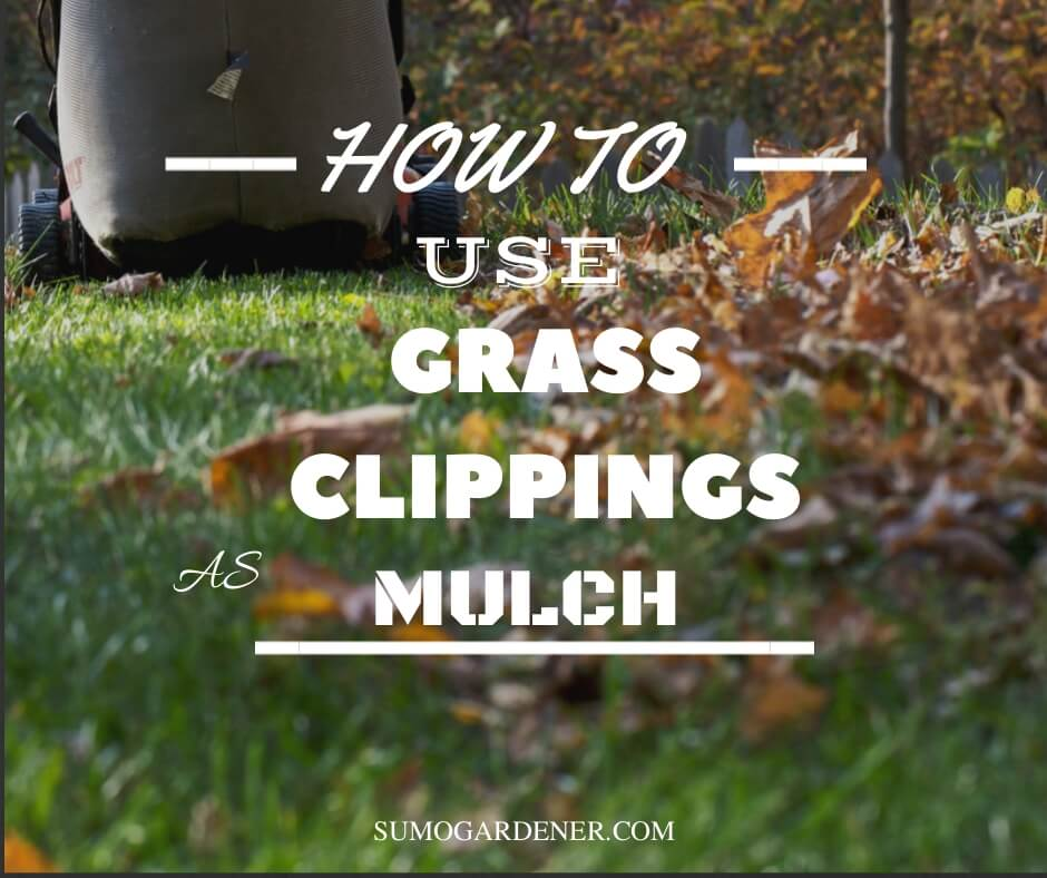 How to use grass clippings as mulch