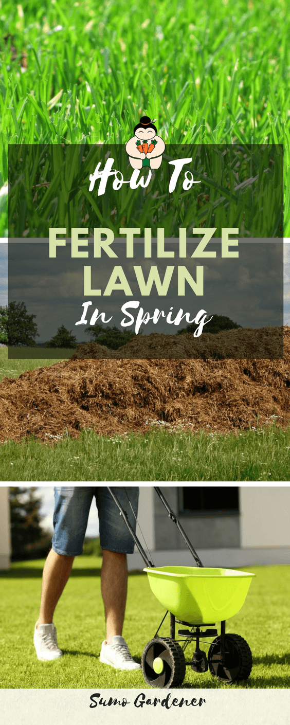 How To Fertilize Lawn In Spring Right Way #lawncare #gardening #fertilizinglawn #organicgardening #sumogardener