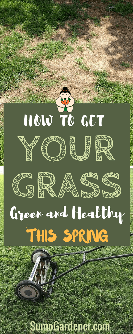 How to Get Your Grass Green and Healthy. we've come up with a simple guide on how to get grass green and healthy to the lost souls out there. #lawncare #gardening #springgarden #sumogardener