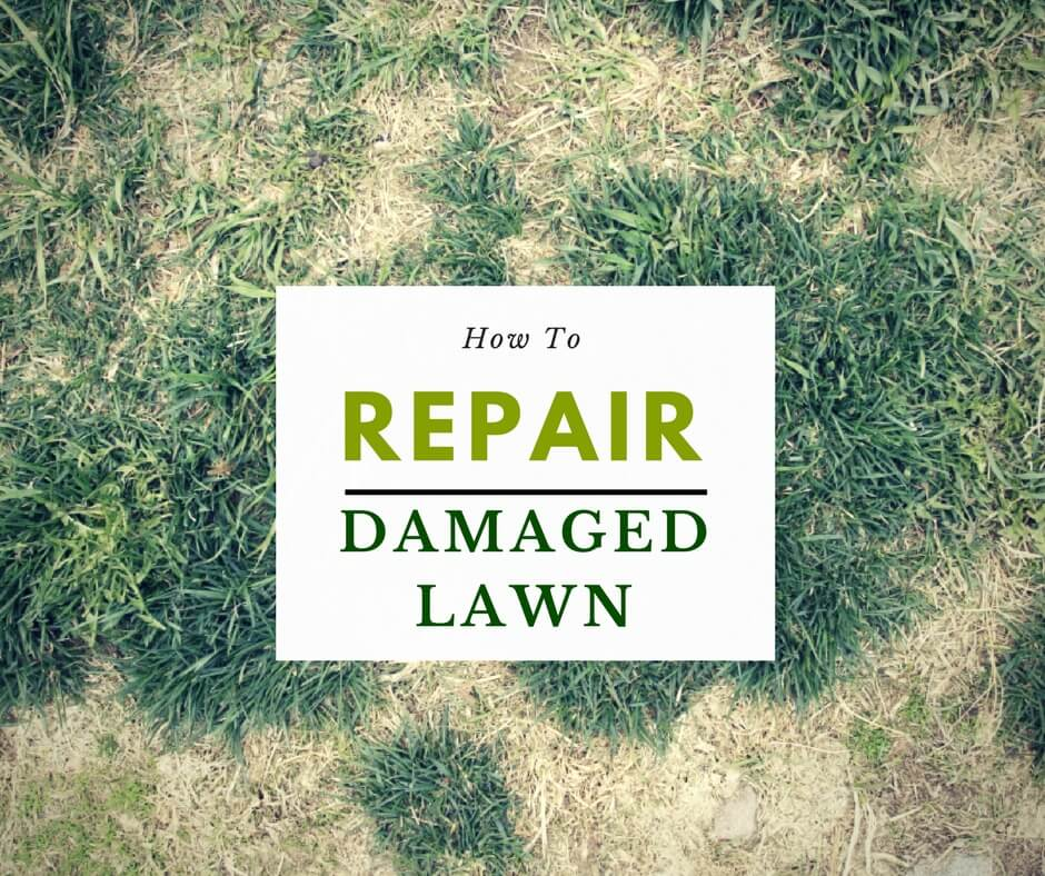 How To Repair Damaged Lawn