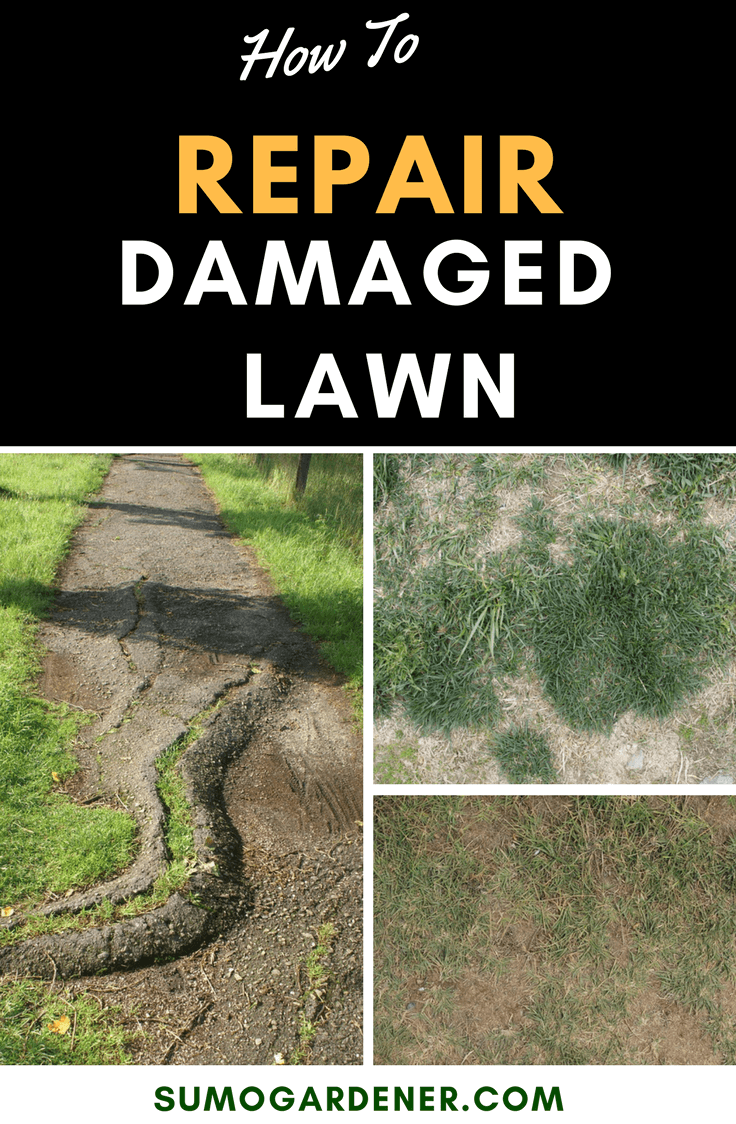 If you see that a section of your lawn is no longer growing any healthy grass, it needs to be repaired immediately. Otherwise, you are going to be left with an unsightly lawn. Wouldn't you want a lush, green lawn instead? Here, we discuss the steps on how to repair damaged lawn. #lawncare #damagedlawn #repairlawn #wateringlawn #growgrass