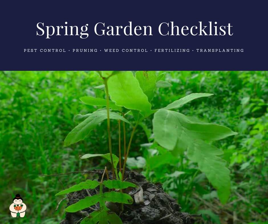Spring Garden Checklist: What to do in the garden in spring?