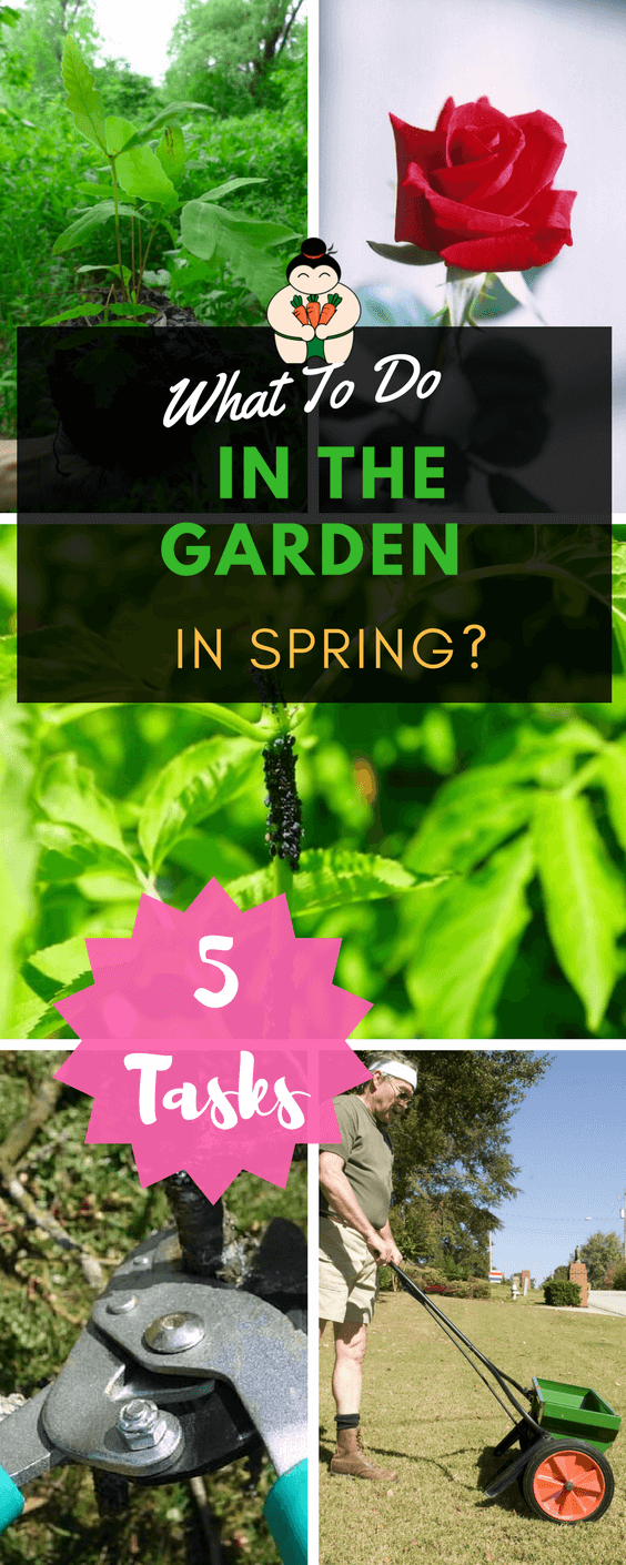 What to do in Garden In Spring?  #springgarden #sumogardener #translanting #pruning #pestcontrol #fertilizing #weedcontrol