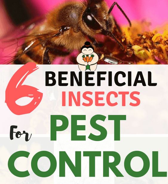 6 Beneficial Insects for Garden Pest Control