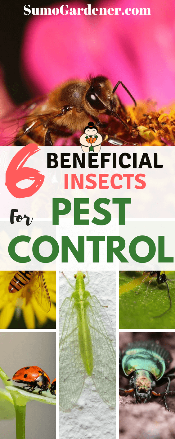 6 Beneficial Insects For Garden Pest Control. Let the professional gardeners help you, they have knowledge of many more such beneficial insects and will help you build a lovely garden.