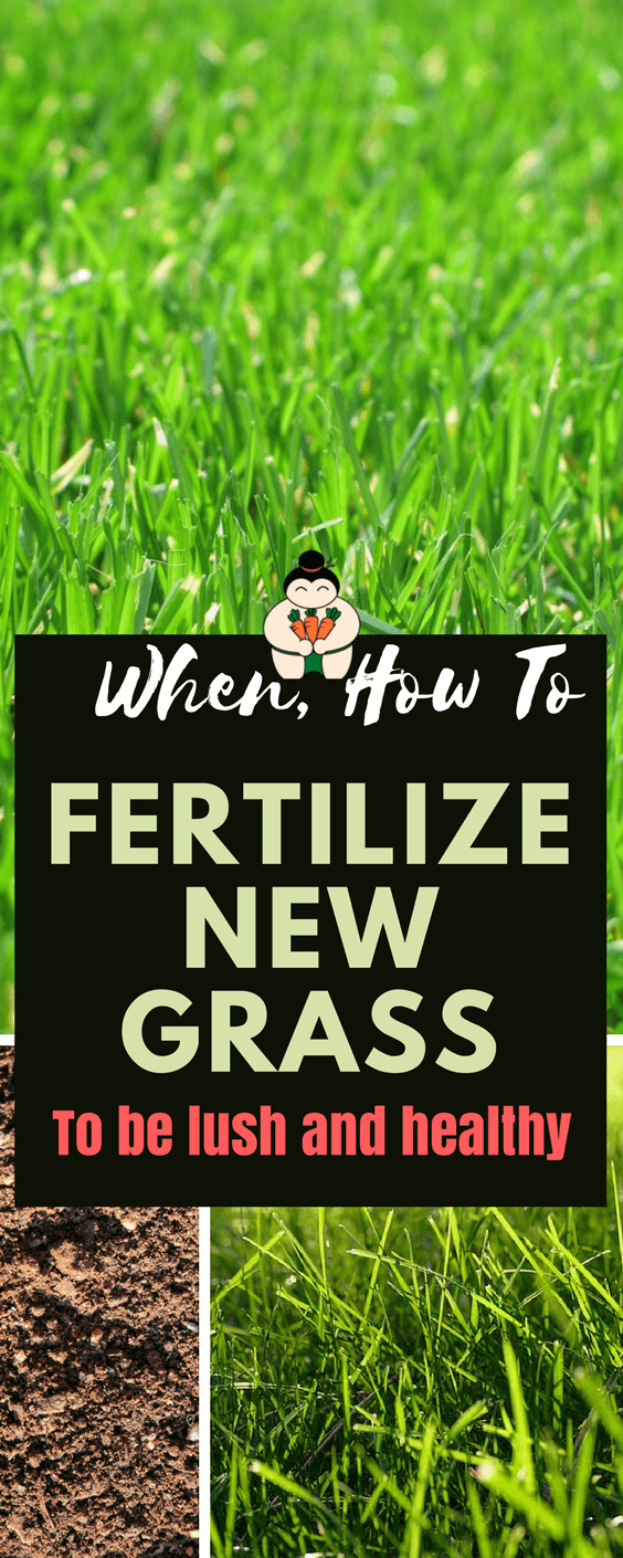 When To Fertilize New Grass? To Be lush and healthy #lawncare #gardening #gardeningtips #sumogardener