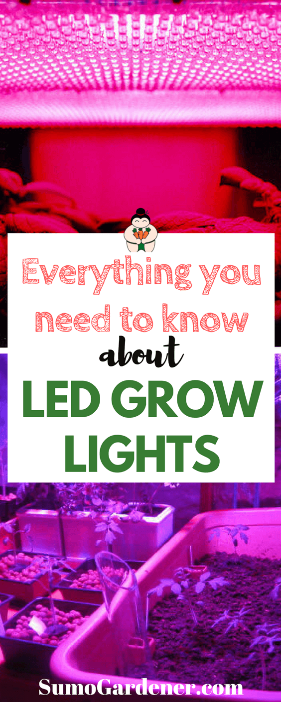 Everything you need to know about Led Grow Lights