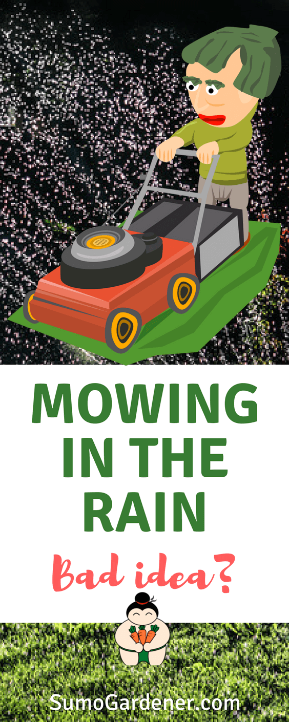 Mowing in the rain: Is it a bad idea? #lawncare #gardeningtips #sumogardener
