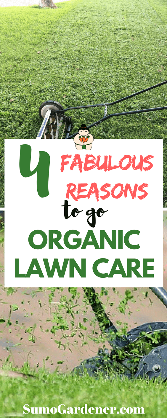 Your approach to organic lawn care doesn't have to be an all-or-nothing approach from the beginning.