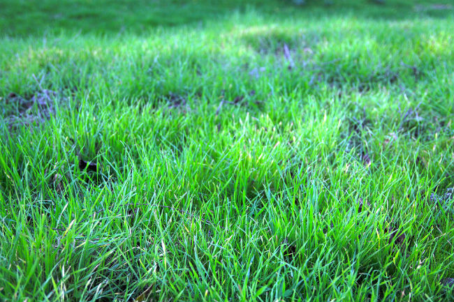Level lawn in spring