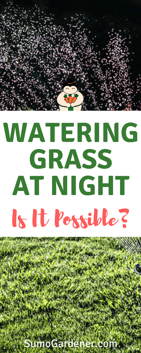Watering Grass At Night - Is it possible?