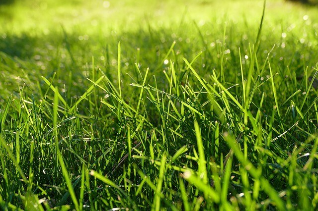 When to fertilize new Grass