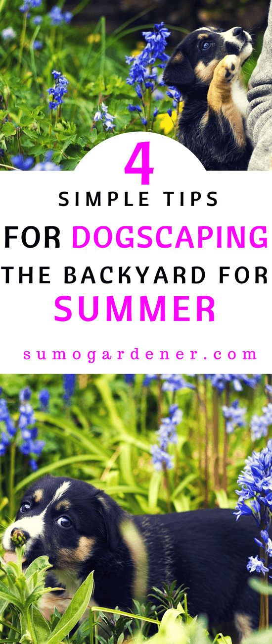 During the summer, your backyard or garden could serve as a great place for your dog to enjoy the warm sunny weather. Before you let your dog loose, there are certain steps you may want to take to dog-proof the backyard.