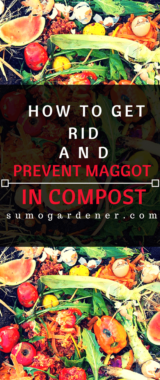 These are the information that you need to know about how to get rid and prevent the maggot in compost. If you want to ensure that your compost bin will remain free from these pesky maggots, then following the tips above will surely be beneficial not only for your compost but your plants as well.