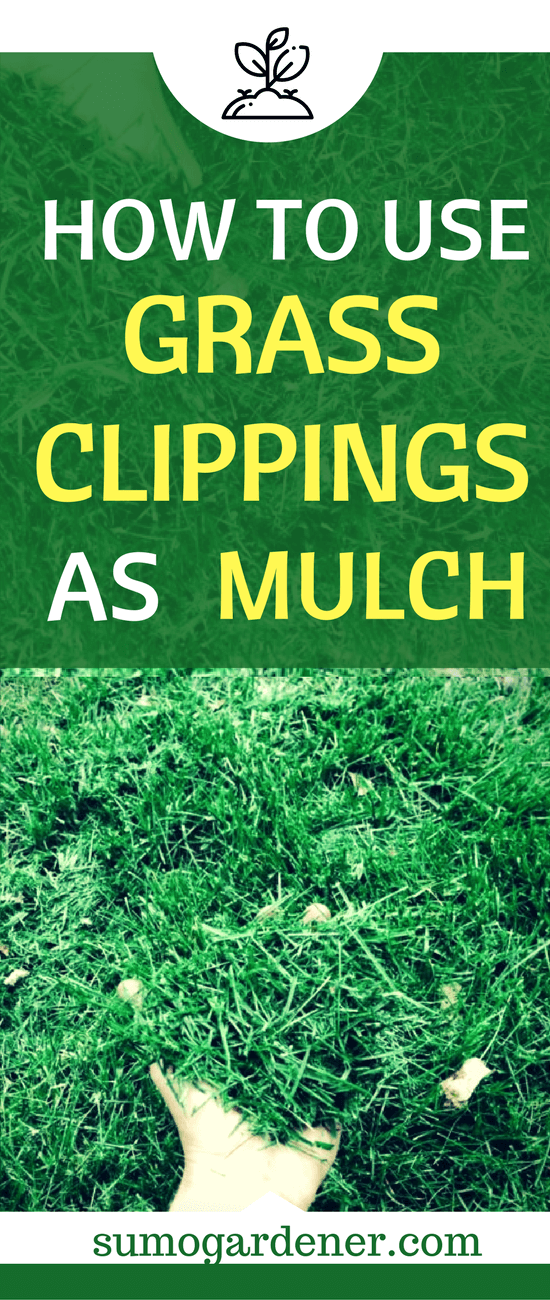 One of the most effective ways on how you can look after your lawn is by mulching it. Some people tend to buy mulches, or some prefer organic. But one of the easiest ways to have a mulch is through the grass clippings that you have after mowing your lawn.