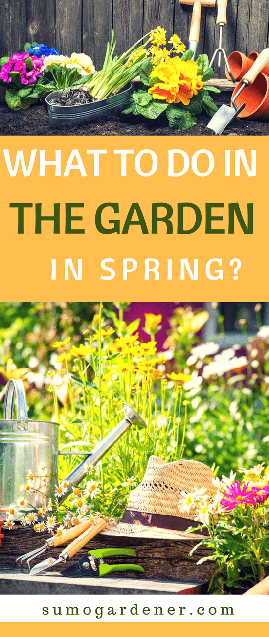 There are many gardening tasks to conduct in spring. This is a period when certain weeds and pests can spread and damage your garden. On the other hand, spring is also a time for pruning, transplanting, and applying fertilizer.