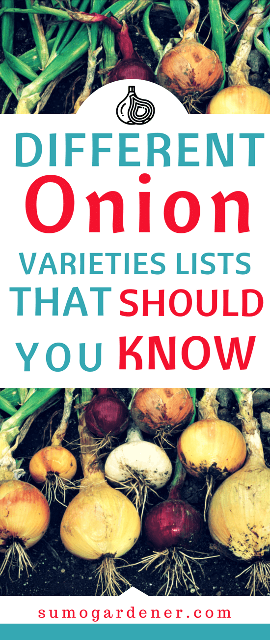 As you all know, onions are needed to ensure that the flavor of your food will be enhanced. They are actually divided into different types. Having so many varieties of onions can be hard for people who are planning to grow some in their garden.