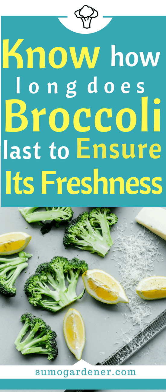 These are all the relevant information that you need when it comes to the longevity of the broccoli and how you can ensure that it will maintain the freshness that it has.
