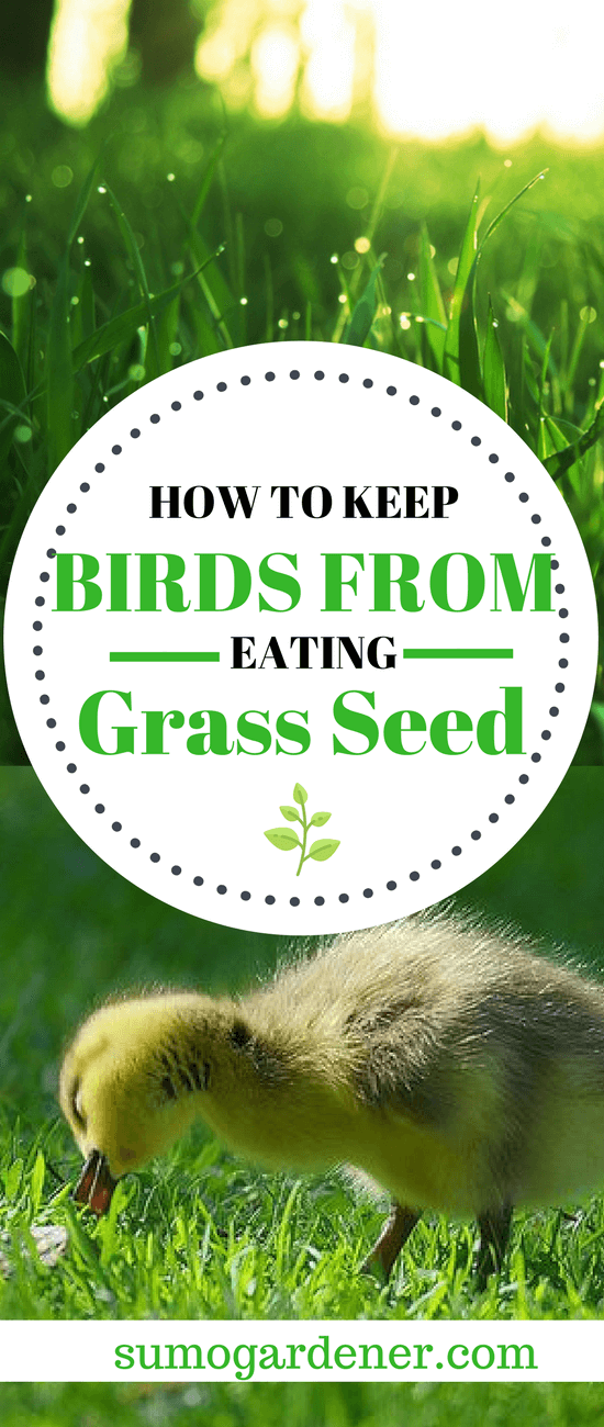 How to Keep Birds from Eating Grass Seed