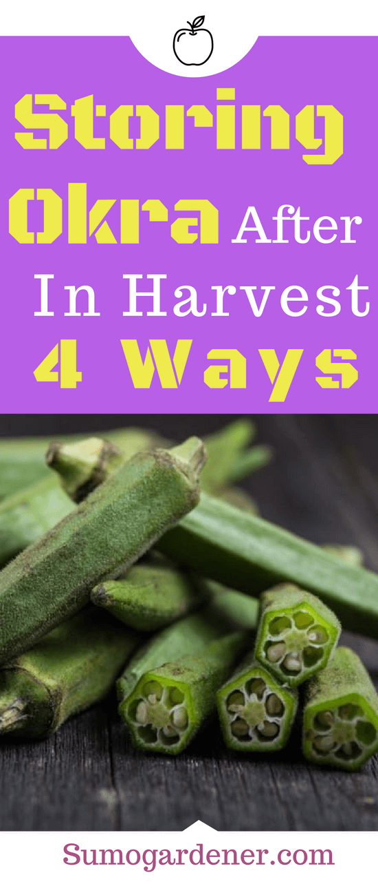 These are 4 of the best ways to store okra. You are sure to have a hefty harvest on your hands. There is no reason to let any of them to go waste when you have a few options on hand. Okra can be stored fresh for up to 4 days. However, long term storage has a few different options.