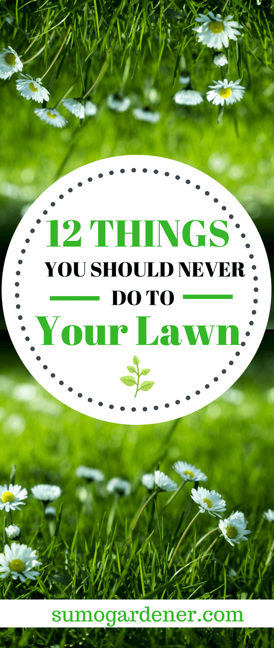 12 Things You Should Never Do To Your Lawn