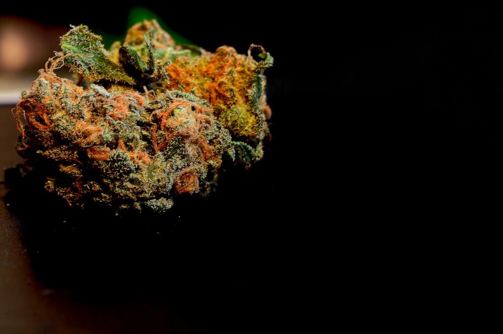 how to grow orange kush