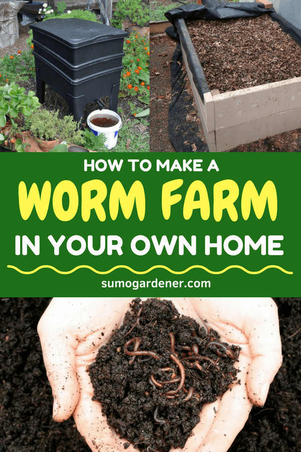 People tend to purchase a worm farm, which can be very expensive. This is the reason why more and more people are looking for ways on how they can make their worm farms.