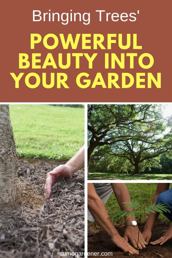 Bringing tree' powerful beauty into your garden