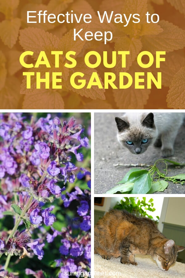 There are ways to make sure your cats leave your precious garden alone. Here are five ways