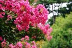 10 Trees You Should Plant In Your Garden
