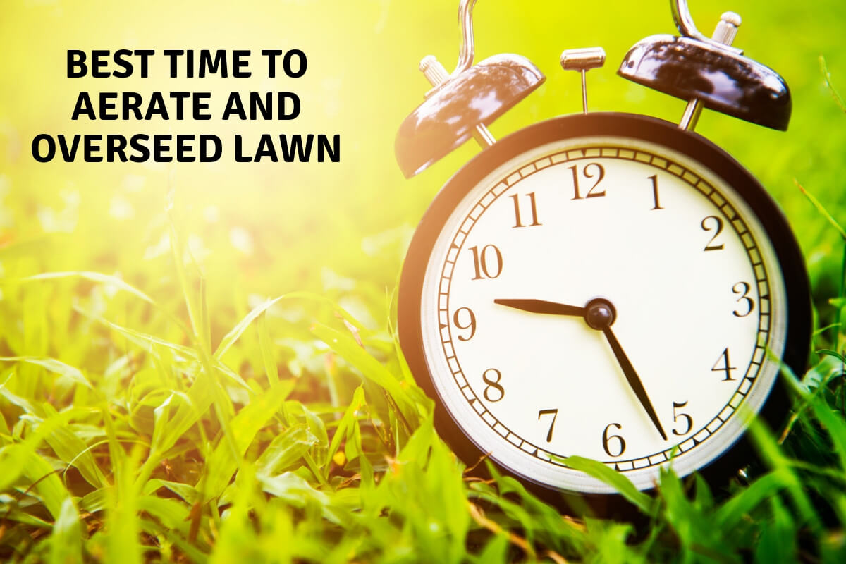 Best time to aerate the lawn