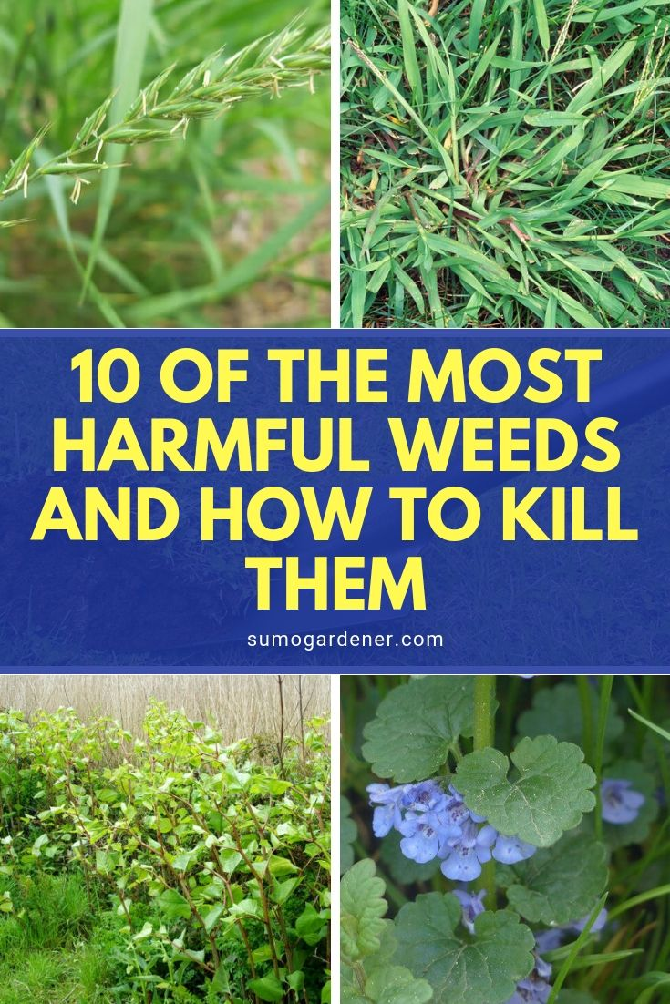 When these bad weeds appear on your property, you need to know how to remove them immediately. Here, we've made an informative guide on top 10 of the most harmful weeds and how to kill them