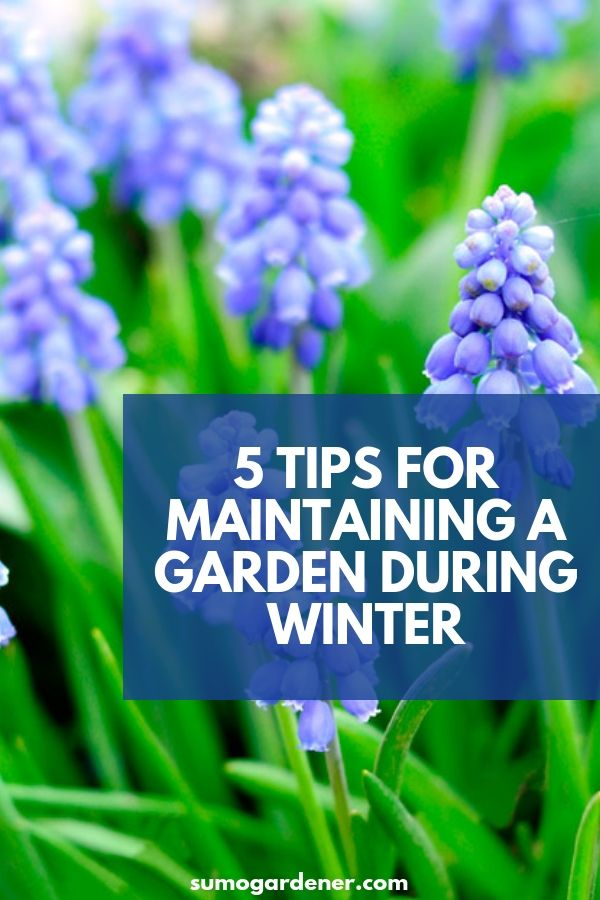 5 Tips for Maintaining a Garden During Winter