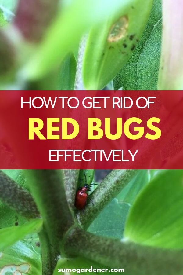 Follow the tips on how to get rid of red bugs for you to be able to protect your yard and yourself