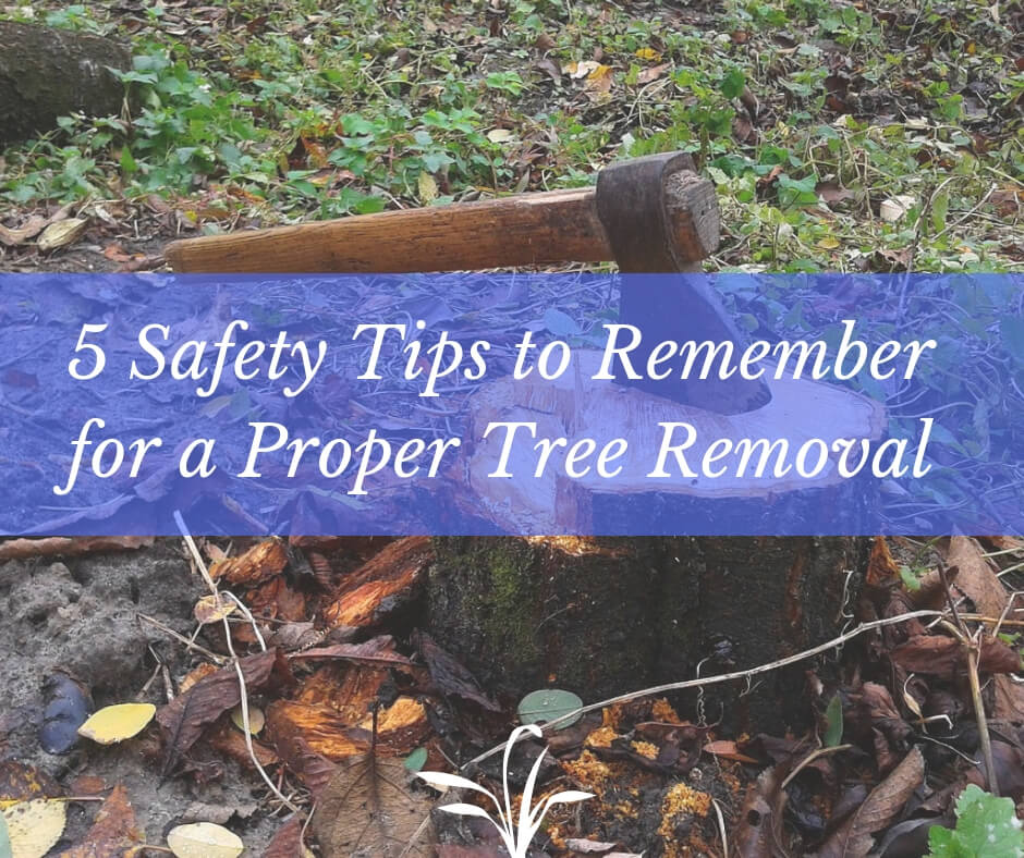 5 Safety Tips to Remember for a Proper Tree Removal