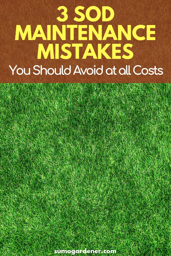 3 Sod Maintenance Mistakes You Should Avoid at all Costs