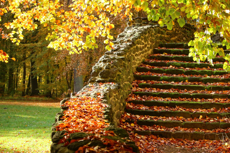 elevated steps in your garden