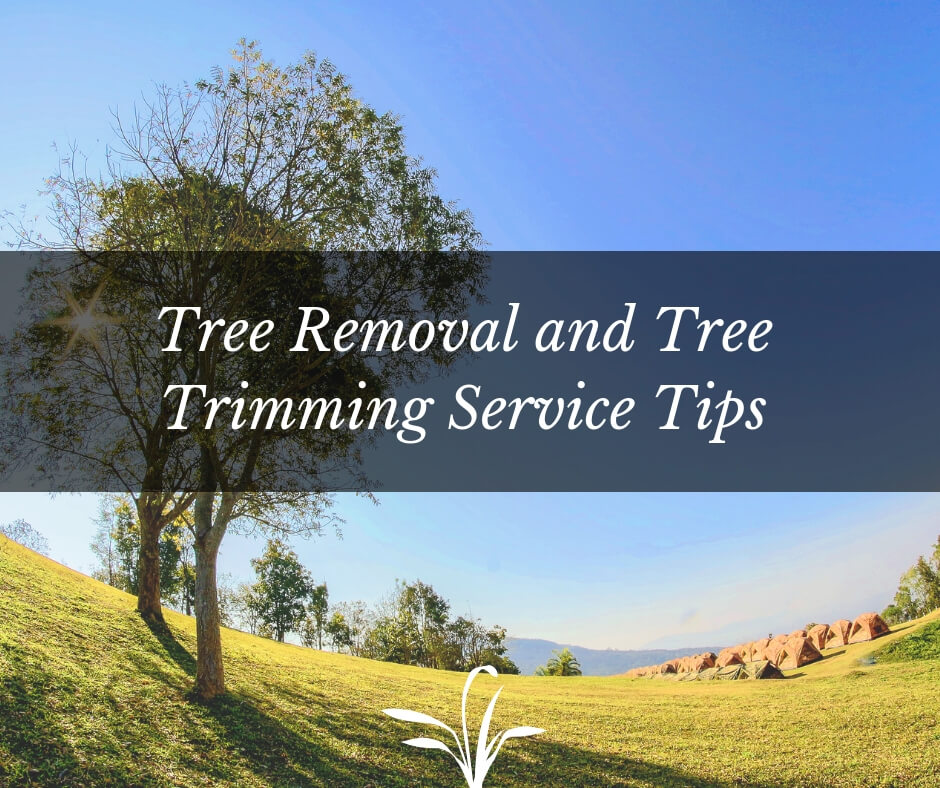 Tree removal & tree trimming tips