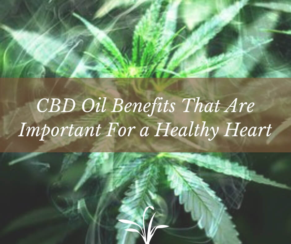 CBD Oil Benefits That Are Important For a Healthy Heart