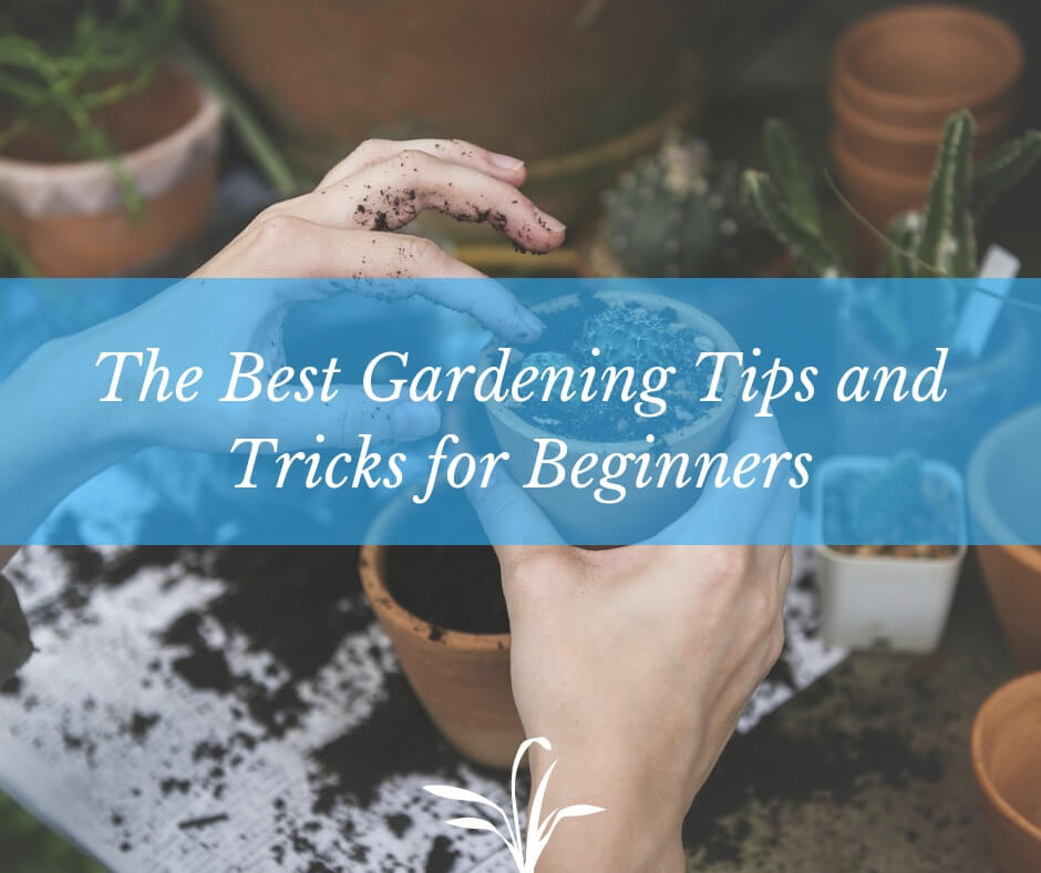 The Best Gardening Tips and Tricks for Beginners