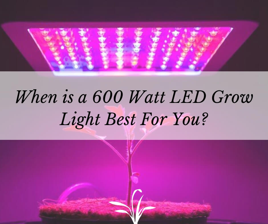 When is a 600 Watt LED Grow Light Best For You? - Sumo
