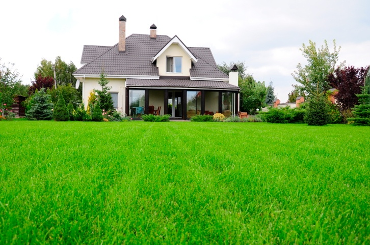 How To Maintain A Healthy Lawn All Year Round Sumo Gardener