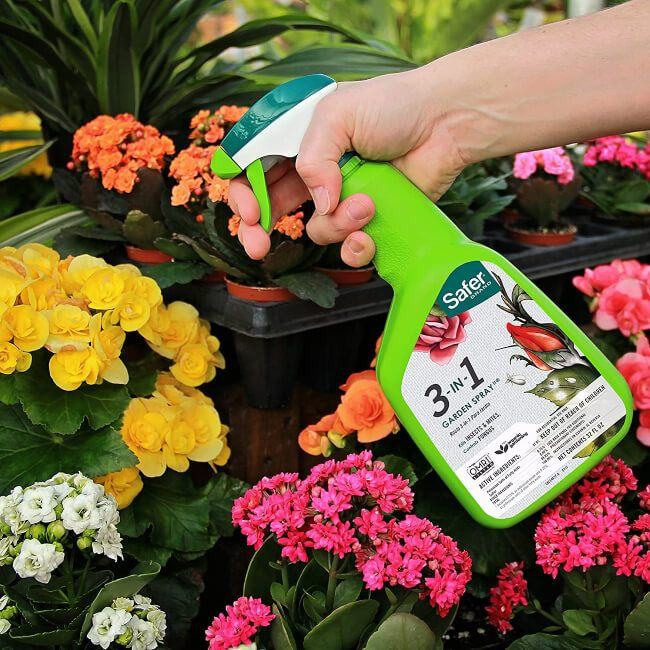 Treating the affected plants with pesticide