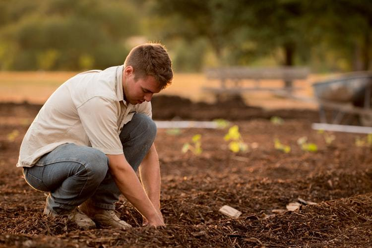 Tree Planting Tips For Beginners