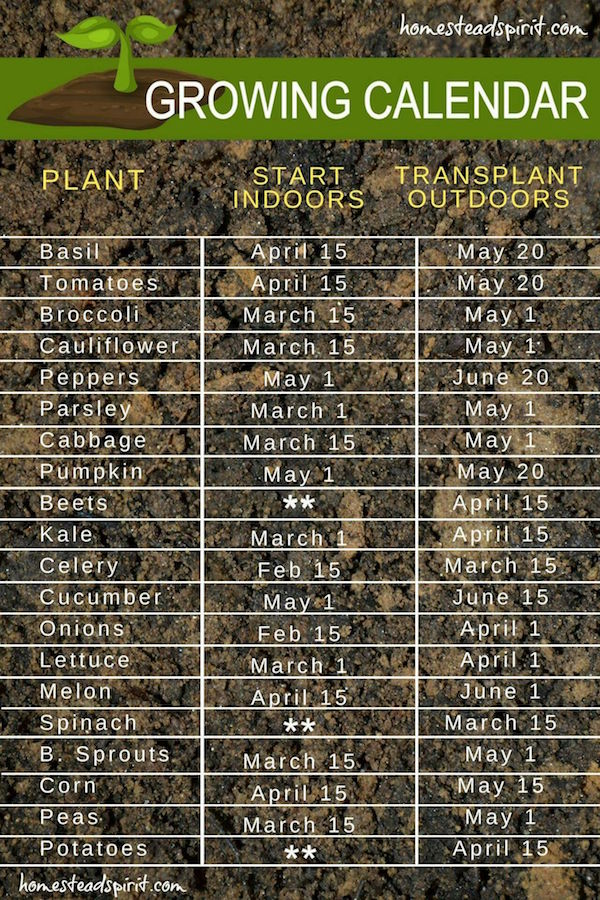 How to Choose the Right Seeds for Your Garden?