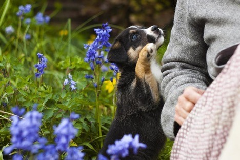 garden friendly for dogs