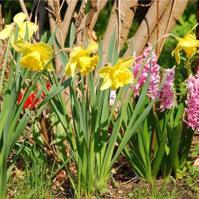 bright flowers instantly add something beautiful to your yard