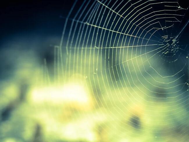 6 Ways to Control Spiders in Your Garden