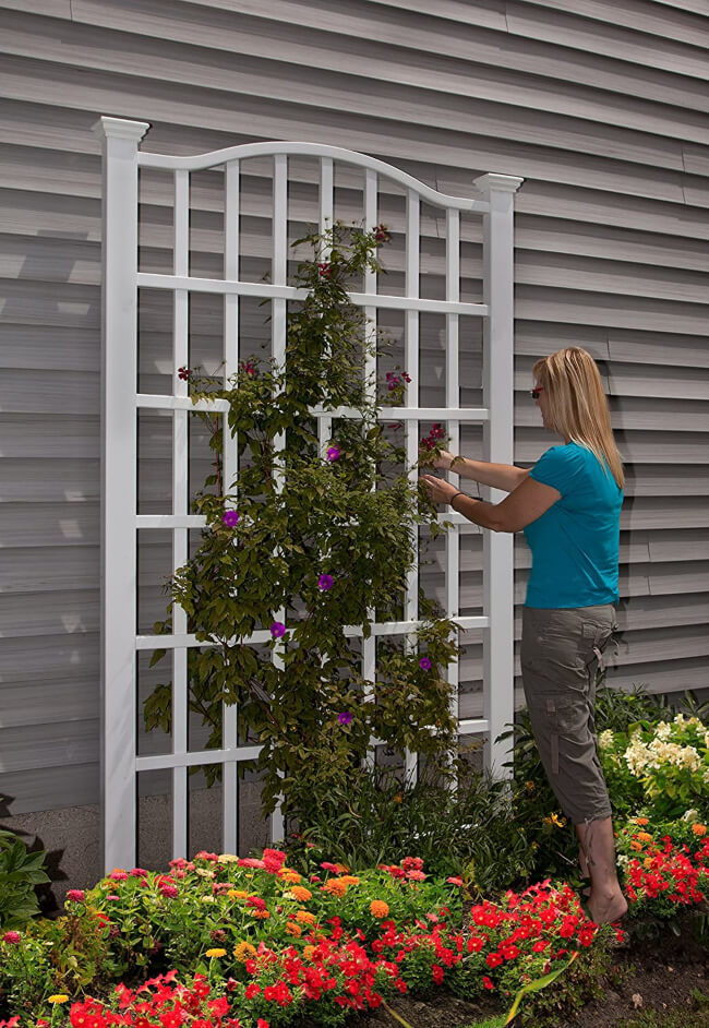 How to utilize vertical space for gardening